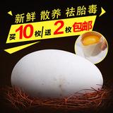 农家鹅蛋 生态散养鹅蛋 孕妇去胎毒土鹅蛋草鹅蛋处子鹅蛋 买10送2