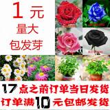 四季套餐阳台室内庭院盆栽花卉易种满天星薰衣草波斯菊玫瑰花种子