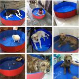 狗狗洗澡盆宠物泰迪可折叠游泳池狗澡盆 金毛大型犬浴缸浴盆80*20