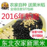 2015年东北黑米500g 农家自产黑香米有机粗粮五谷杂粮黑米粥原料