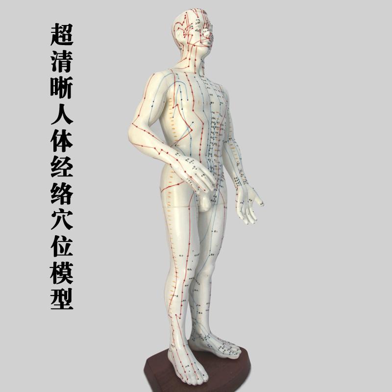 超清晰 普通版人体穴位模型 人体经络穴位模型 人体男模 人体女模商品