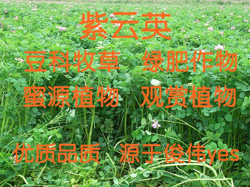 主播青草2016种子