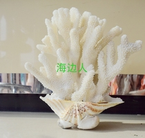 Natural coral stone conch shell crafts ornaments fish tank decoration landscaping living room lucky tree bonsai