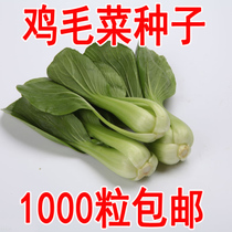 Vegetable seed chicken hair vegetable seeds small greens cabbage Four Seasons can be broadcast balcony courtyard