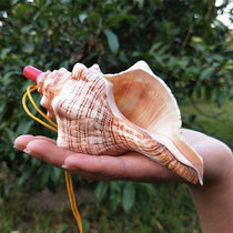 Natural conch whistle sea snail Horn Horn conch shell crafts creative gift childrens toys blow