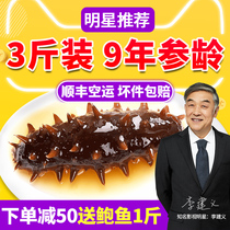 ㊙Kang Yue Tang instant sea cucumber Dalian wild Liaoning sea cucumber 1500g fresh sea seepage gift box non-dry single loaded