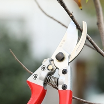 Zhang Xiaoquan Elite branching shear chrome carbon steel garden horticultural shear belt safety buckle labor saving anti-skid Fruit Branch Scissors