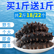 Fresh sea cucumber Dalian wild fresh sea cucumber 1000G special