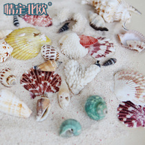 Natural shell conch coral fish tank ornaments shoot props crafts micro-landscape Mediterranean starfish ornaments
