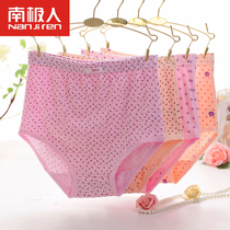 Antarctic elderly lady underwear female cotton waist XL loose plus fat mother elderly briefs