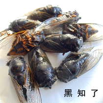 Pure dry wild black cicada monkey full dry molting cicada climbing fork monkey drying old cicada turtle Monk meat 100g