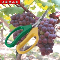 Zhang Xiaoquan Grape scissors stainless steel warp scissors QFL-19 fruit scissors cutting elbow fruit and vegetable shears potted horticultural scissors