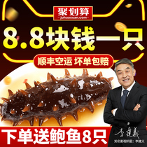 Kang Yue Tang instant sea cucumber Dalian wild Liaoning sea cucumber 500g fresh special sea infiltration gift box non-dry single loaded