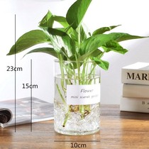 Glass hydroponic plant vase simple creative flowerpot transparent water raising green radish Guanyin bamboo flower vase container dish