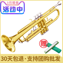 Down B tune trumpet Young Pioneers Army trumpet trumpet musical instrument Western tube string beginner grading