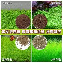 Aquatic plants seed suit lazy entry novice fish tank live aquatic plants underwater grass freshwater four seasons prospects