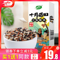 Buy 1 Get 1 free in October paddy light food three color brown rice grain grains red and black rice whole grains fitness Fat Rice 480g