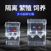 Fish tank isolation box Peacock Hatch box small and medium size fish large trumpet spawners independent breeding box isolation box