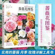 Genuine books rose flower of the Rose family Encyclopedia of rose flower Master experience interview home gardening self-study book rose flower breeding and gardening basics rose rose planting