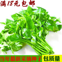 18 yuan large leaf spinach seeds garden balcony potted vegetable seeds spring sowing easy to grow fruits and vegetables planting