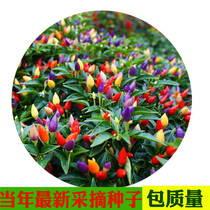 Seven-color edible super spicy five-color pepper vegetable seeds peppers balcony pot indoor four seasons flower high yield pepper