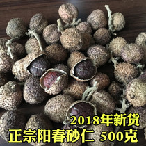 500 grams of Spring Sand Ren Yangchun specialty amomum Spring Sand Ren stomach warm stomach Guangdong Chinese herbal medicine fresh fruit
