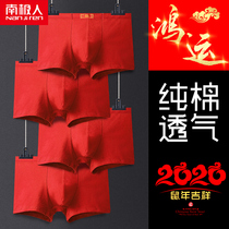 Antarctic men's underwear bent red flat angle pants cotton men's festive mice red shorts head wedding