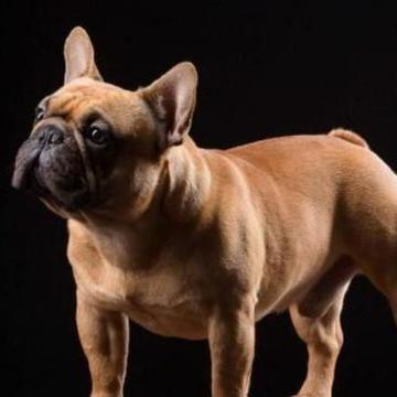 狗狗这5种表现,是表示对你的喜欢